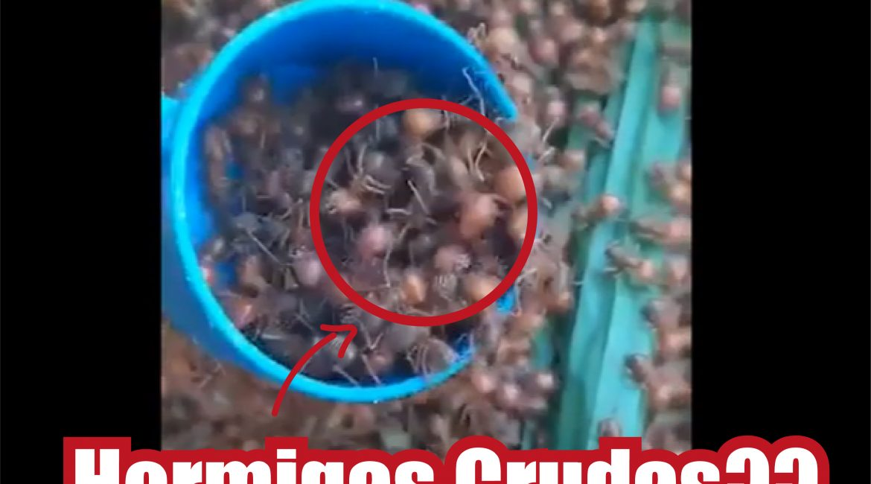 hormiga José Antonio Fonseca Vaca