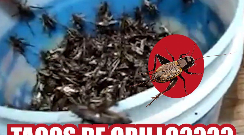 Taco de grillo José Antonio Fonseca Vaca